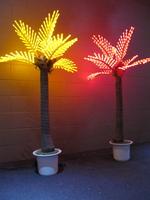 Patio Palm