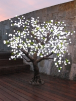 1.4mtr CHERRY BLOSSOM TREE