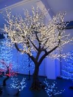 2.9mtr Cherry Blossom Tree