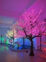 4.8mtr Cherry Blossom tree